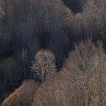 """Serie """"Bosques de Invierno"""" El Porma"""