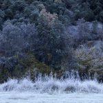 """Serie """"Bosque de Invierno"""" Espinama"""