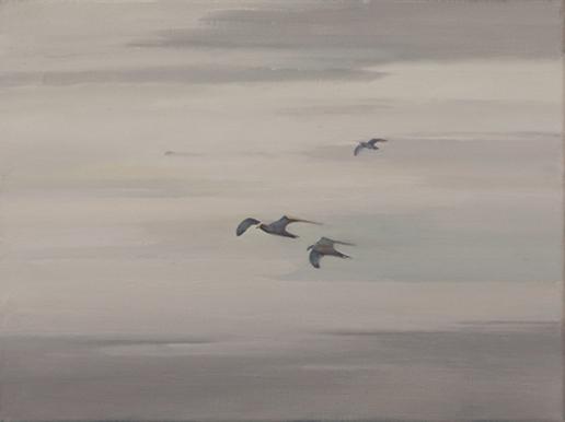 gaviotas volando barrido